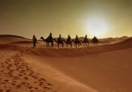 La nave del desierto Tour