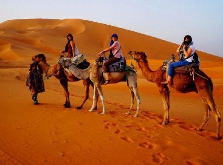 Paseos en camellos